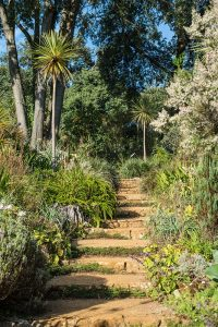 Abbotsbury Subtropical Garden